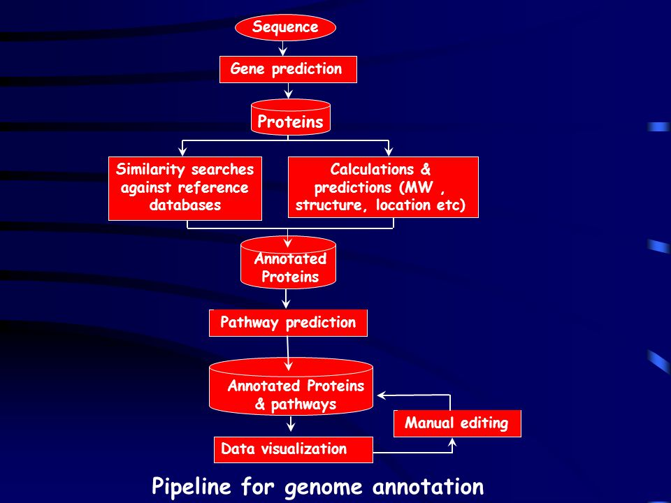 Pipeline for genome annotation