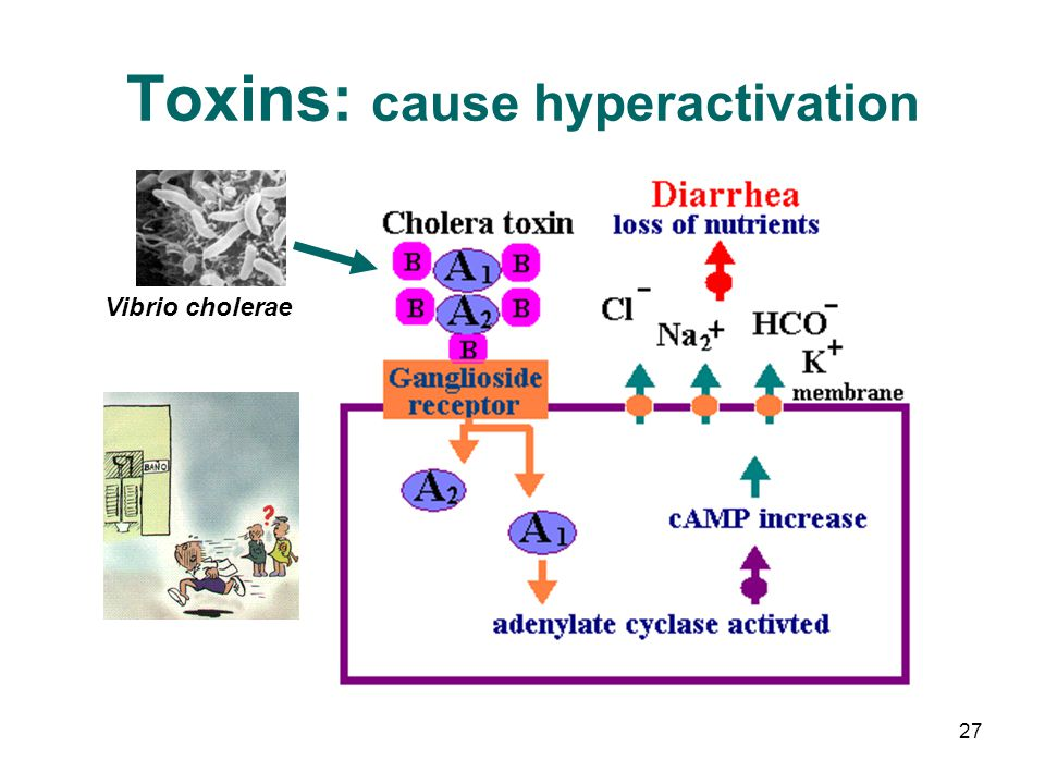 Toxins: cause hyperactivation