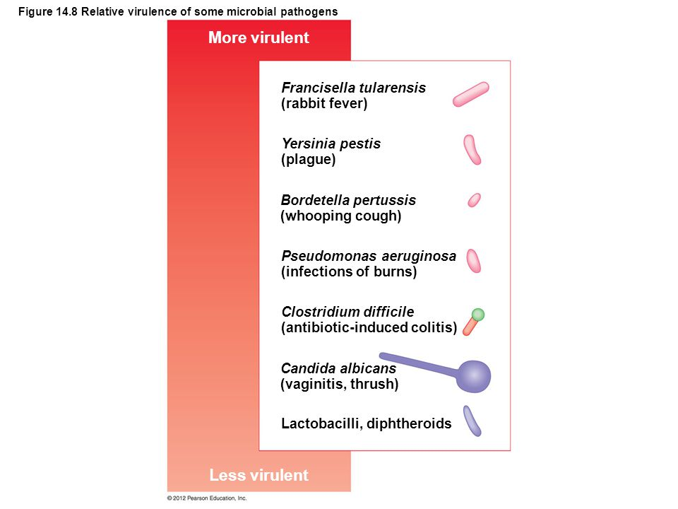 Figure 14.8 Relative virulence of some microbial pathogens