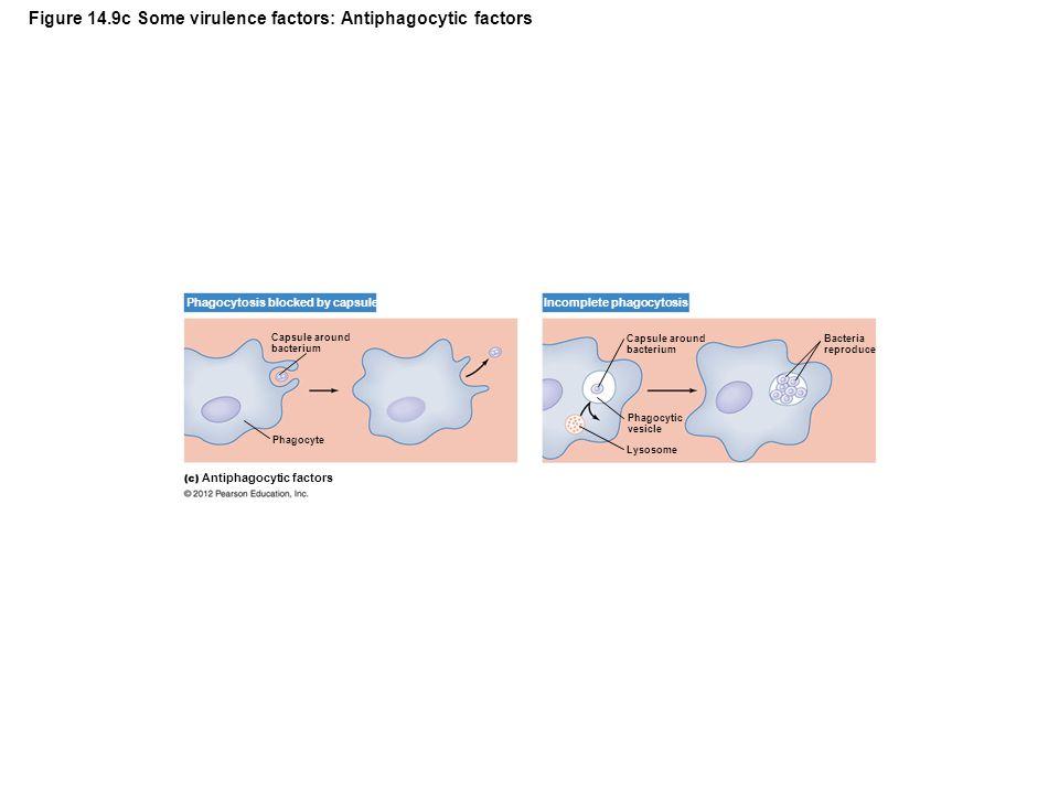 Figure 14.9c Some virulence factors: Antiphagocytic factors