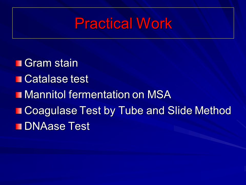 Practical Work Gram stain Catalase test Mannitol fermentation on MSA
