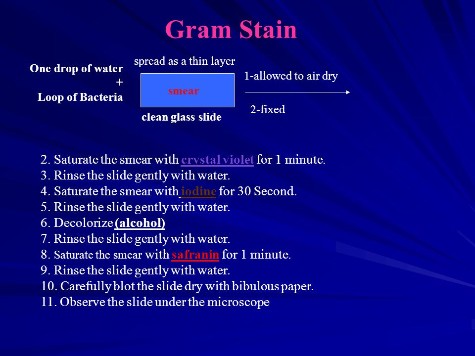 Gram Stain 2. Saturate the smear with crystal violet for 1 minute.