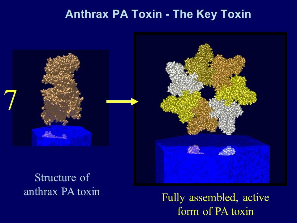 Anthrax PA Toxin - The Key Toxin