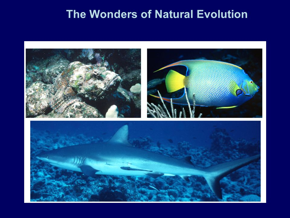 The Wonders of Natural Evolution