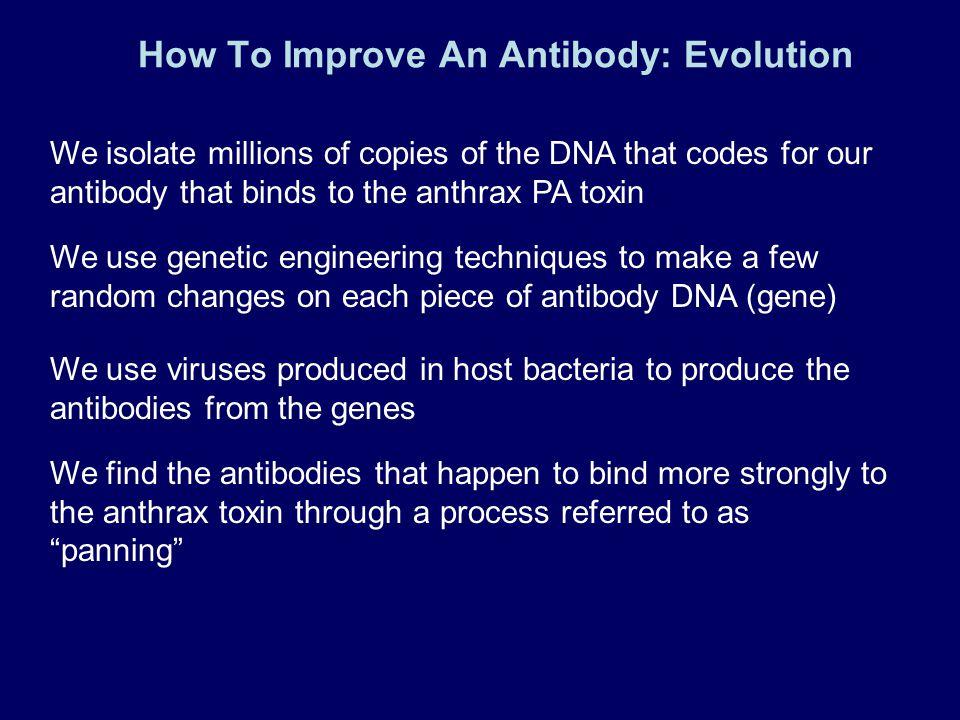 How To Improve An Antibody: Evolution