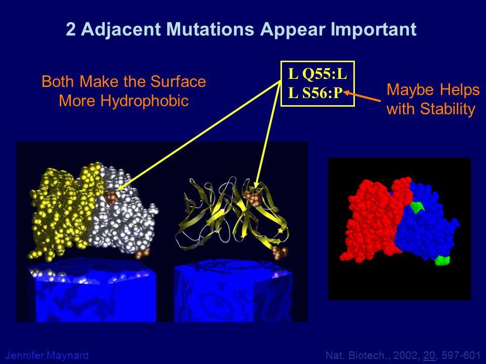 2 Adjacent Mutations Appear Important