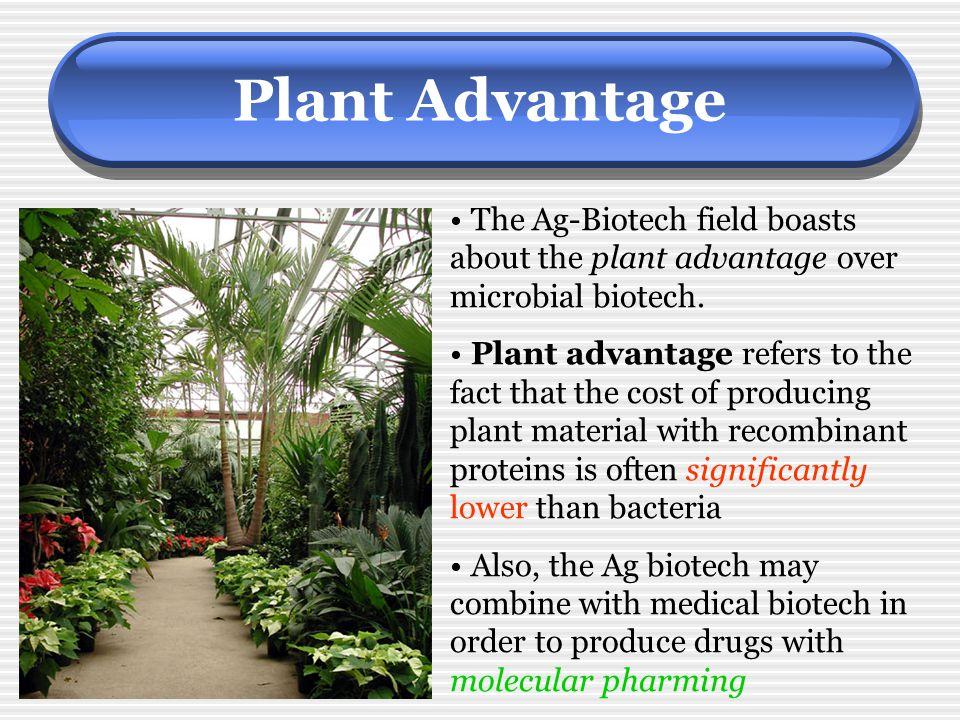 Plant Advantage The Ag-Biotech field boasts about the plant advantage over microbial biotech.