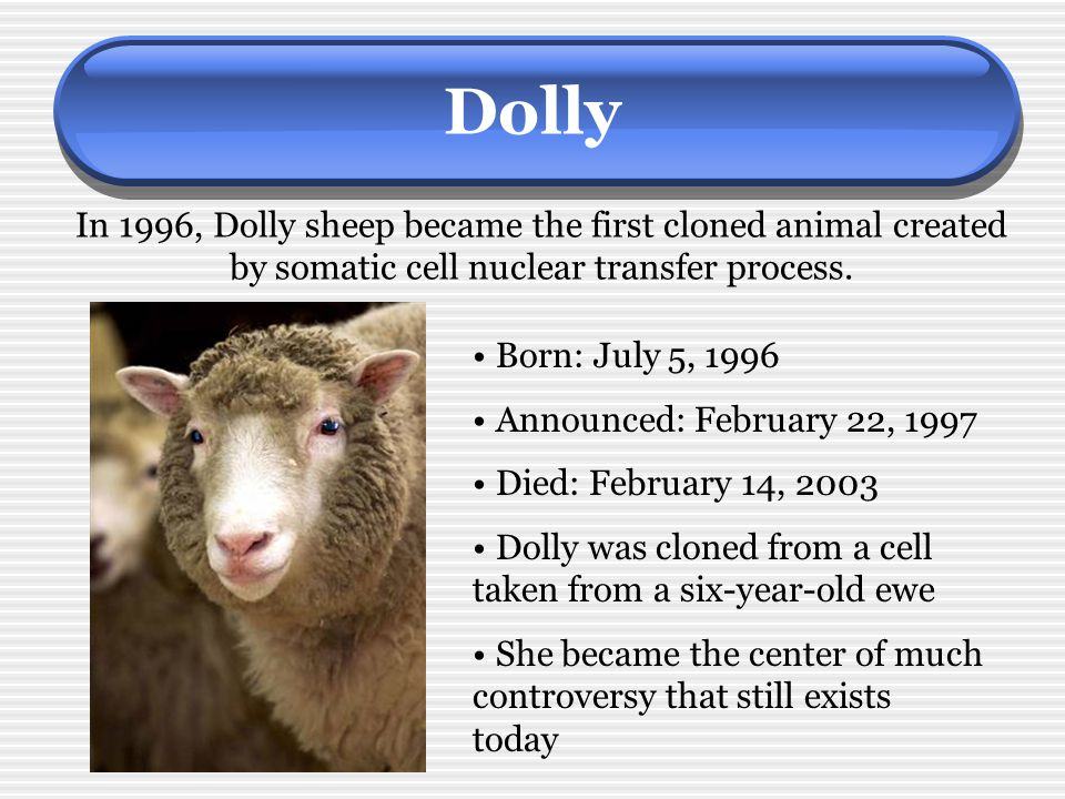 Dolly In 1996, Dolly sheep became the first cloned animal created by somatic cell nuclear transfer process.