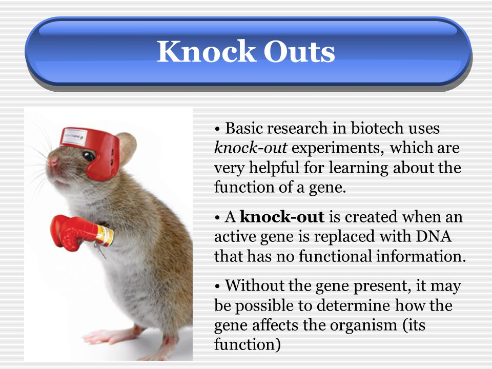 Knock Outs Basic research in biotech uses knock-out experiments, which are very helpful for learning about the function of a gene.