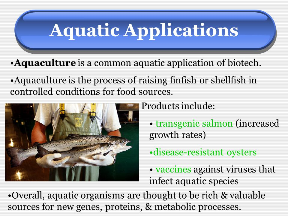 Aquatic Applications Aquaculture is a common aquatic application of biotech.
