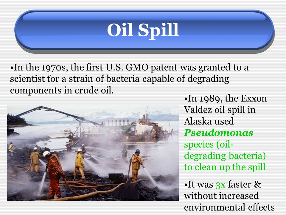 Oil Spill In the 1970s, the first U.S. GMO patent was granted to a scientist for a strain of bacteria capable of degrading components in crude oil.