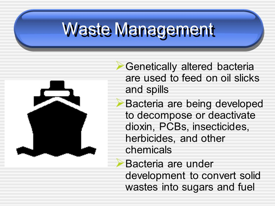 Waste Management Genetically altered bacteria are used to feed on oil slicks and spills.