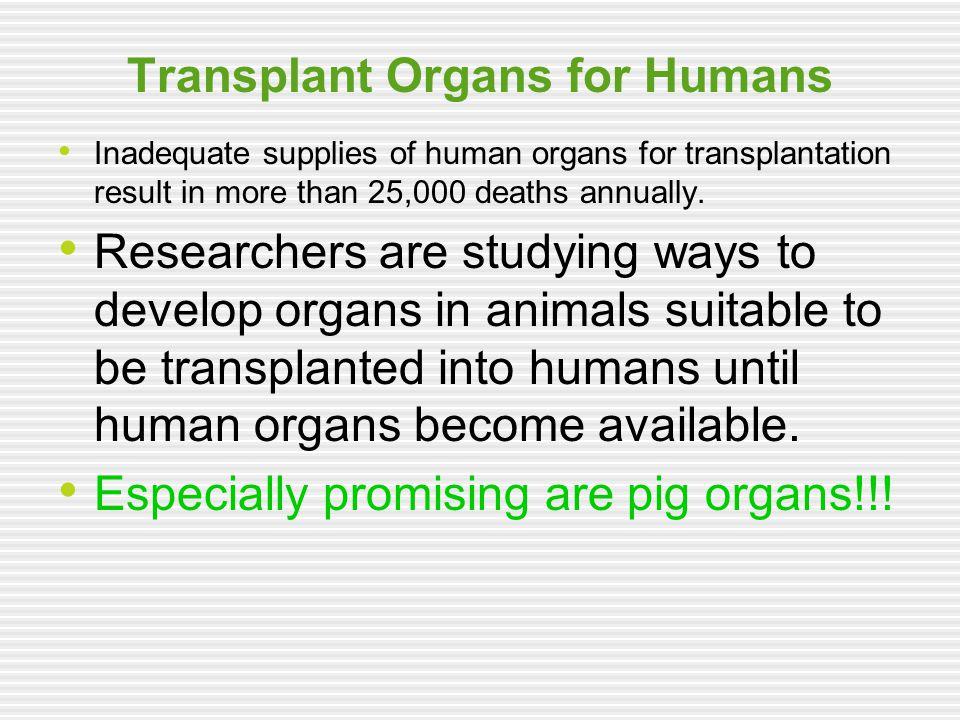 Transplant Organs for Humans