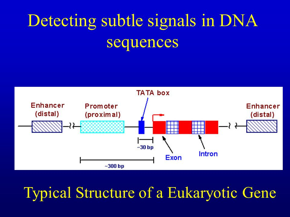 Detecting subtle signals in DNA sequences