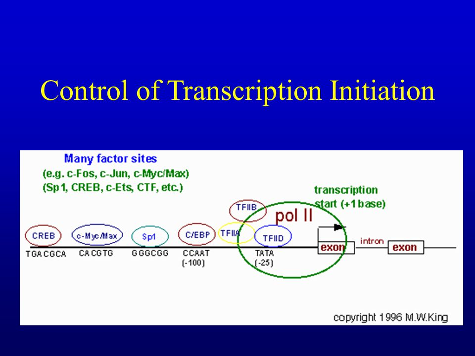 Control of Transcription Initiation