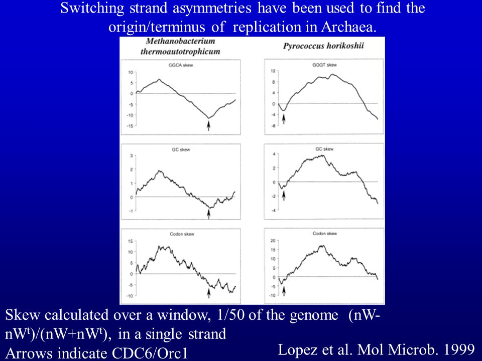 Switching strand asymmetries have been used to find the origin/terminus of replication in Archaea.