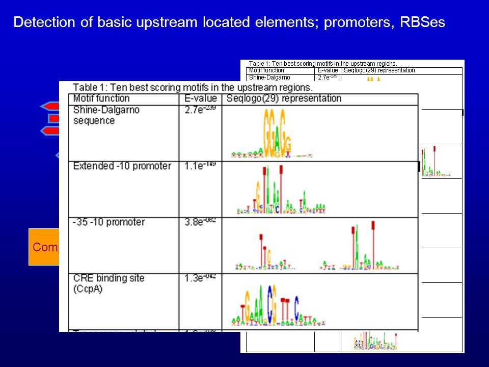 Detection of basic upstream located elements; promoters, RBSes