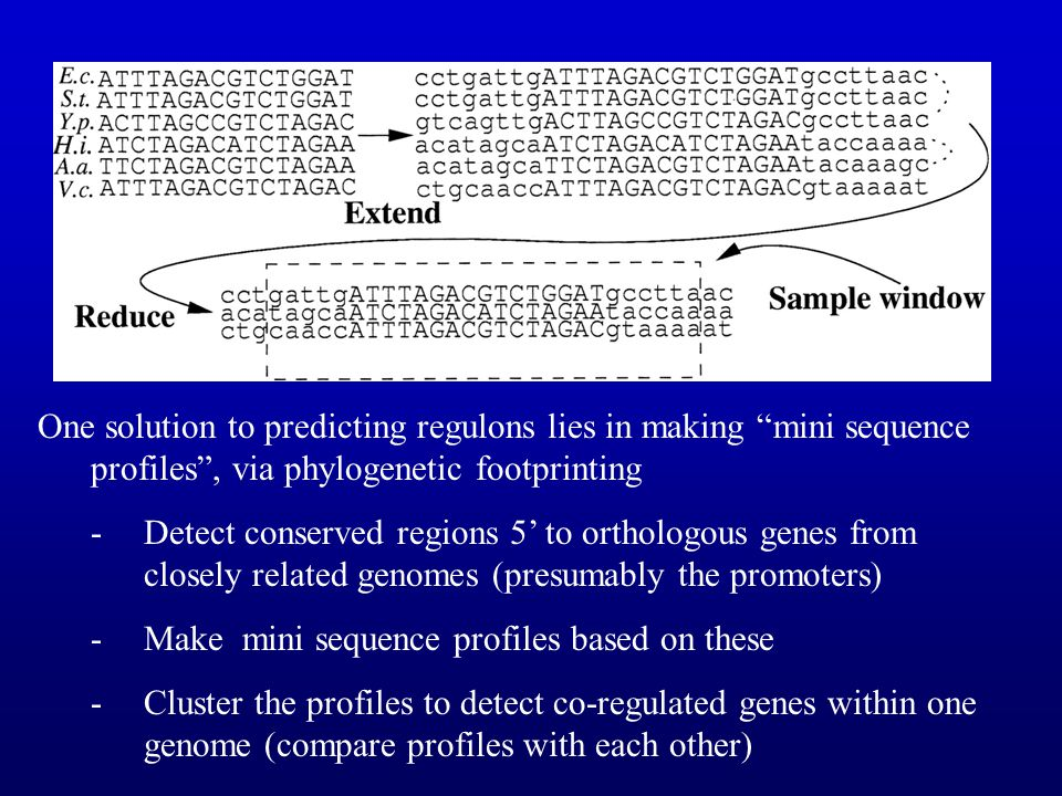 One solution to predicting regulons lies in making mini sequence profiles , via phylogenetic footprinting