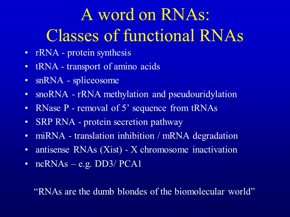 A word on RNAs: Classes of functional RNAs