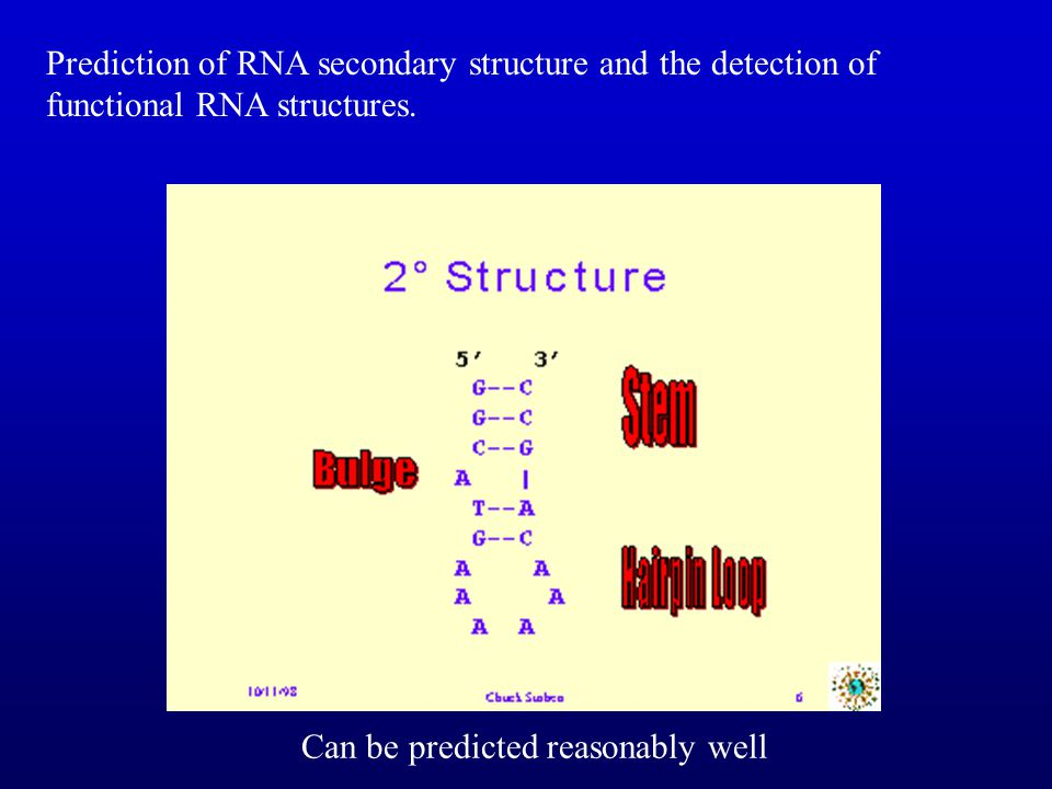 Prediction of RNA secondary structure and the detection of functional RNA structures.