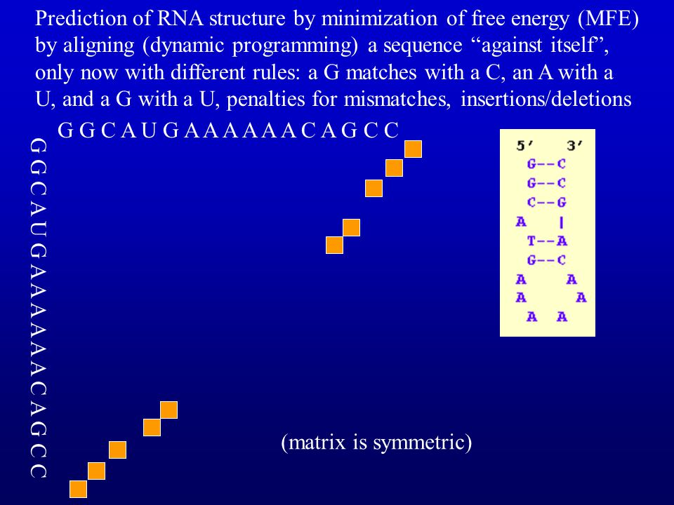 Prediction of RNA structure by minimization of free energy (MFE) by aligning (dynamic programming) a sequence against itself , only now with different rules: a G matches with a C, an A with a U, and a G with a U, penalties for mismatches, insertions/deletions