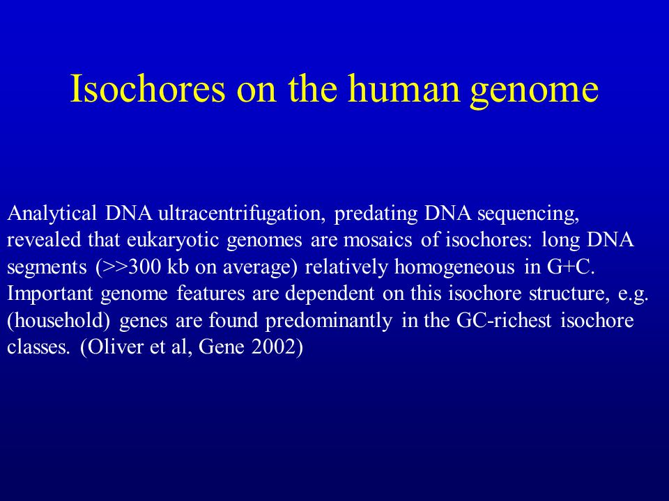 Isochores on the human genome
