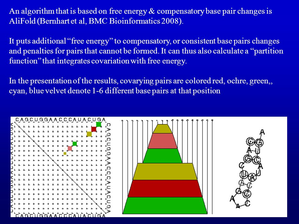 An algorithm that is based on free energy & compensatory base pair changes is AliFold (Bernhart et al, BMC Bioinformatics 2008).