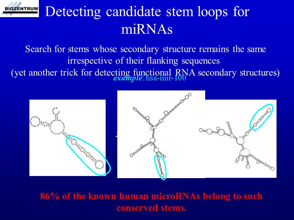 Detecting candidate stem loops for miRNAs