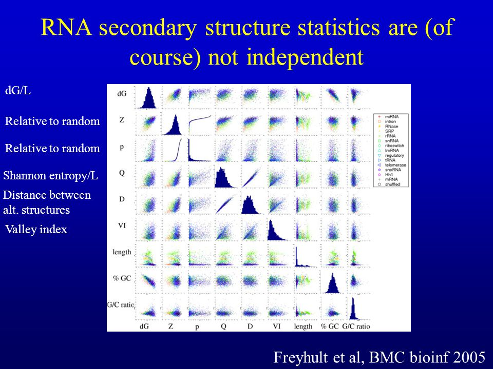 RNA secondary structure statistics are (of course) not independent