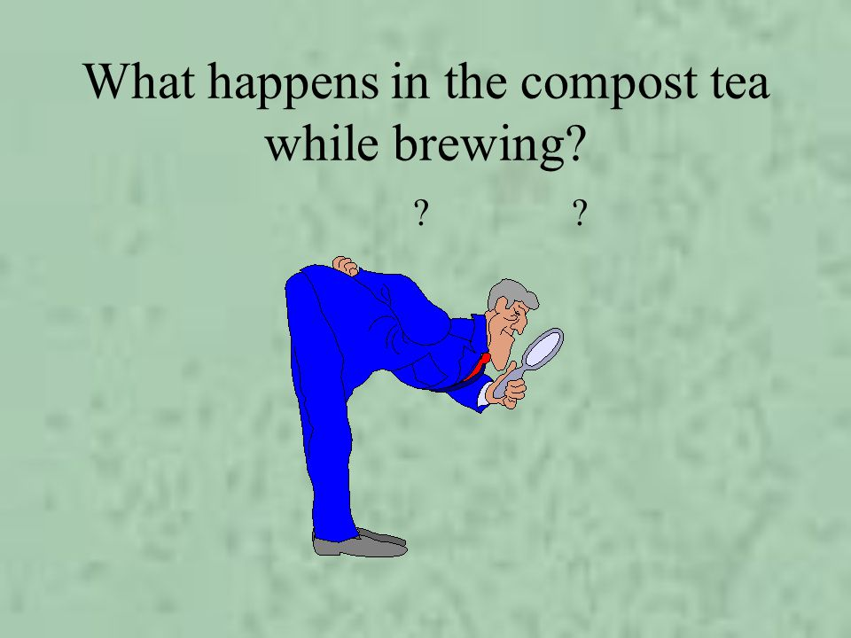 What happens in the compost tea while brewing