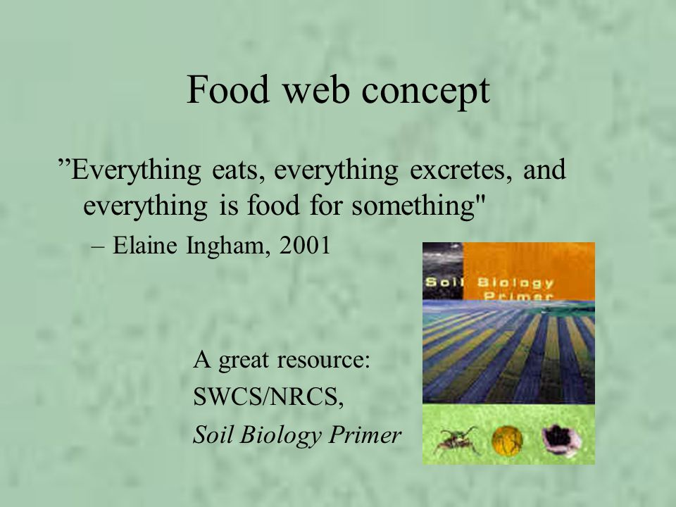 Food web concept Everything eats, everything excretes, and everything is food for something Elaine Ingham, 2001.