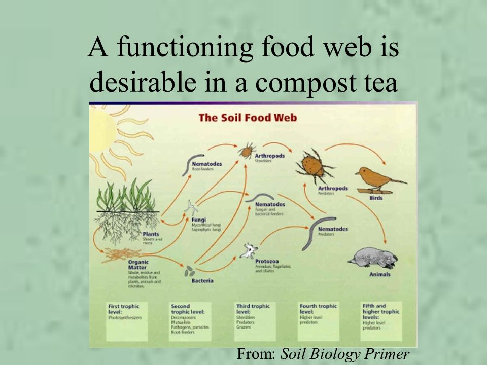 A functioning food web is desirable in a compost tea