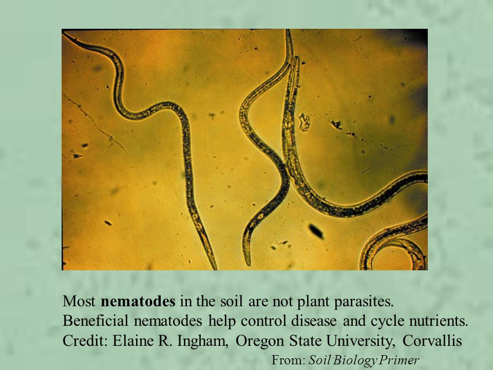 From: Soil Biology Primer