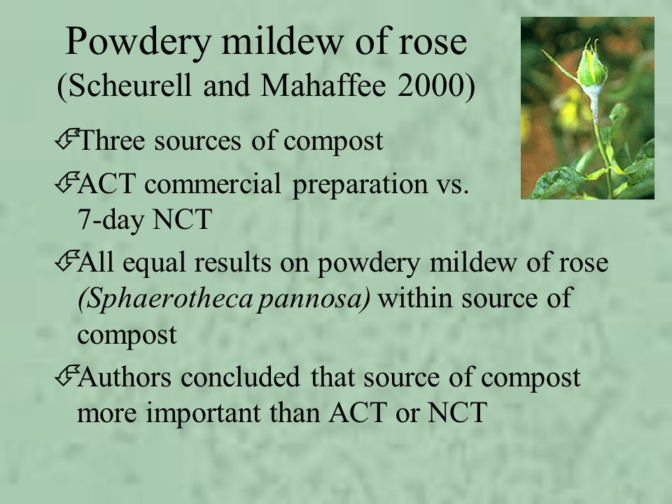 Powdery mildew of rose (Scheurell and Mahaffee 2000)