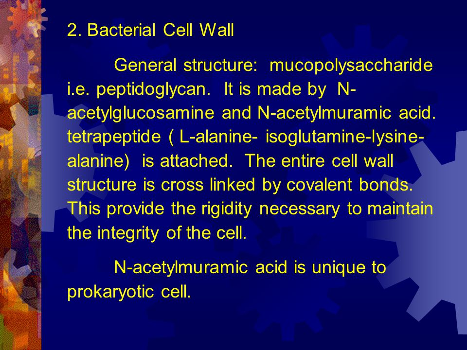2. Bacterial Cell Wall