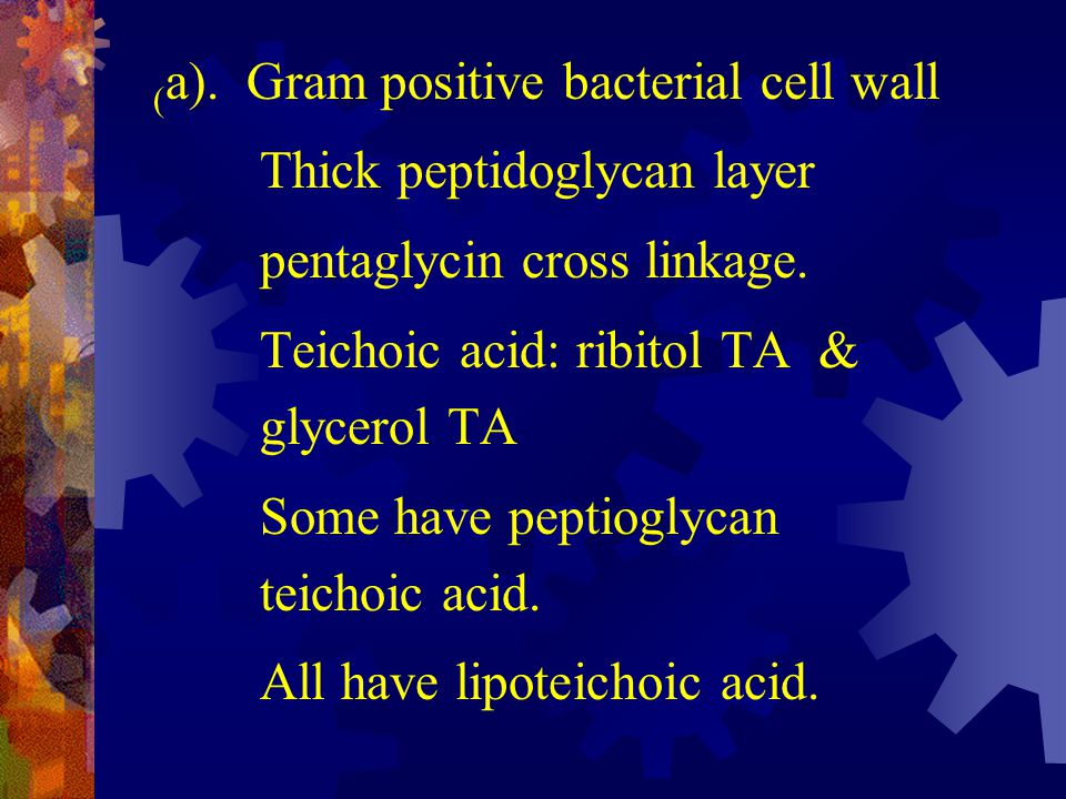 (a). Gram positive bacterial cell wall
