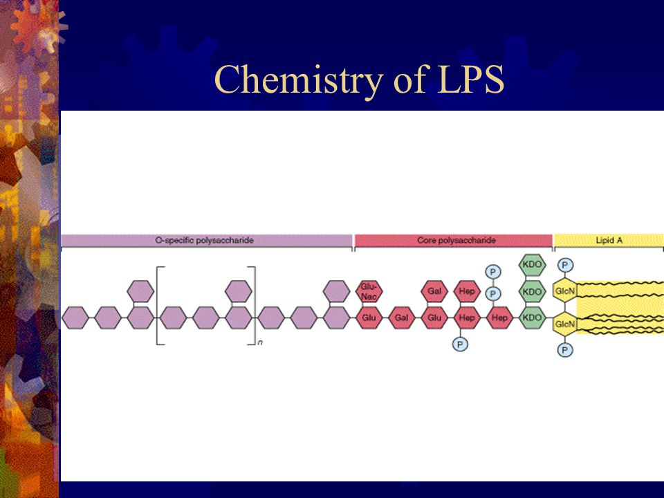 Chemistry of LPS