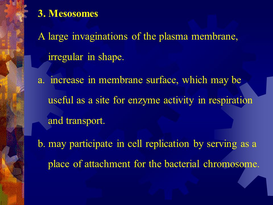 3. Mesosomes A large invaginations of the plasma membrane, irregular in shape.