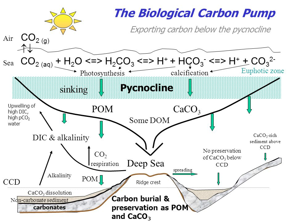 The Biological Carbon Pump