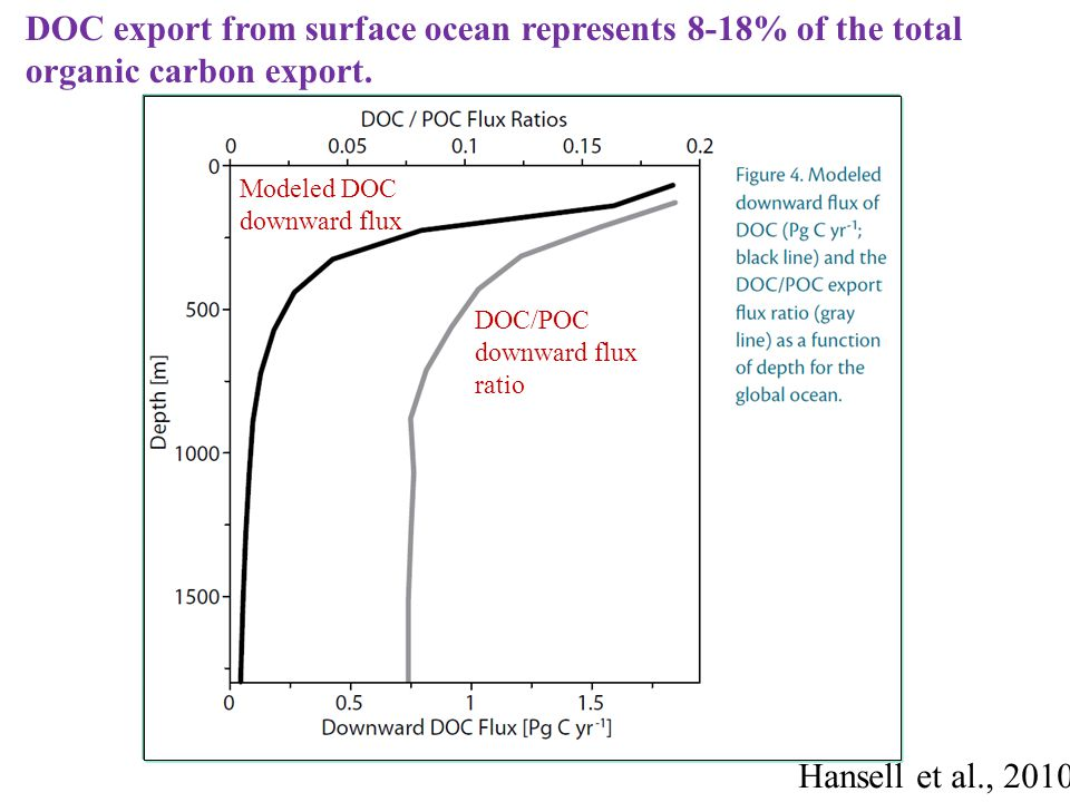 DOC export from surface ocean represents 8-18% of the total organic carbon export.