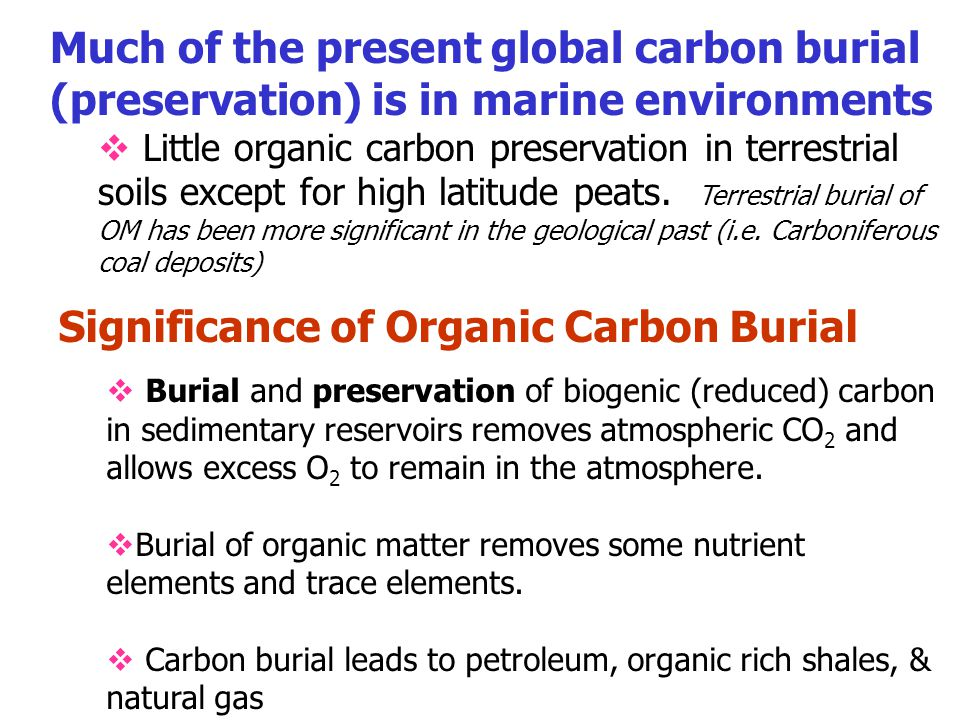 Significance of Organic Carbon Burial