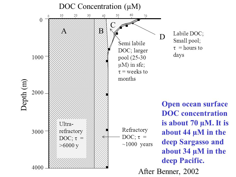DOC Concentration (µM)