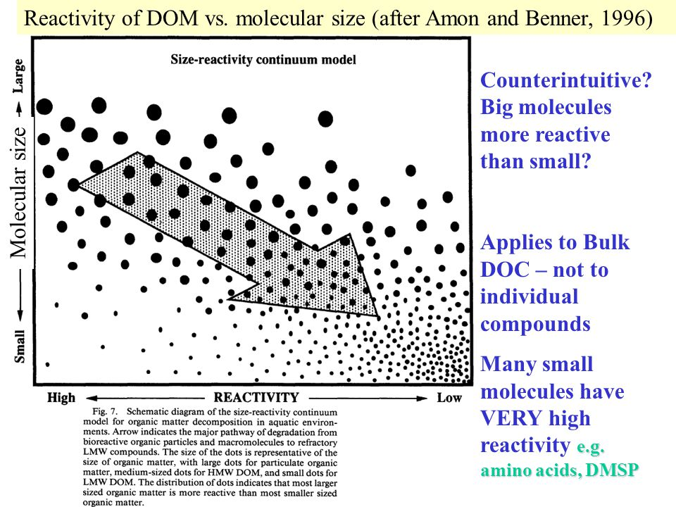 Reactivity of DOM vs. molecular size (after Amon and Benner, 1996)