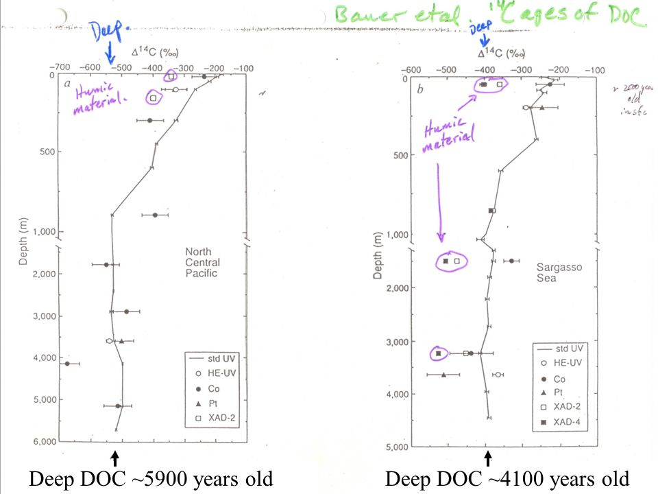 Deep DOC ~5900 years old Deep DOC ~4100 years old