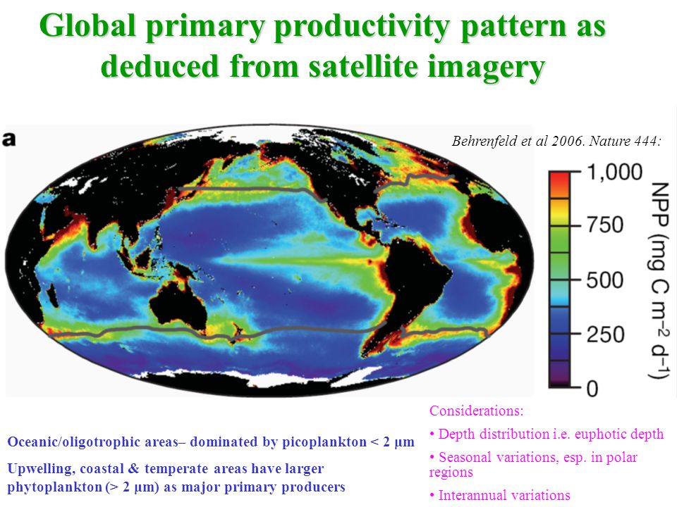 Global primary productivity pattern as deduced from satellite imagery