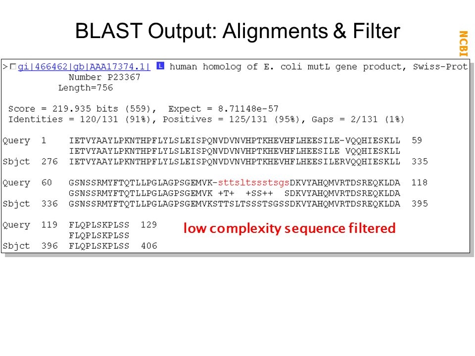 BLAST Output: Alignments & Filter
