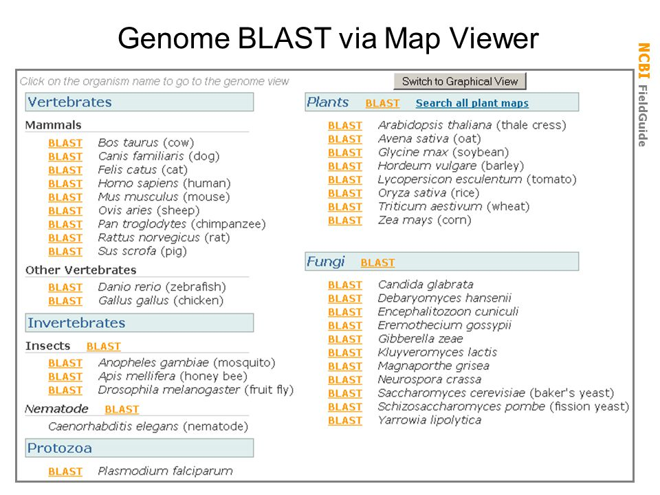 Genome BLAST via Map Viewer