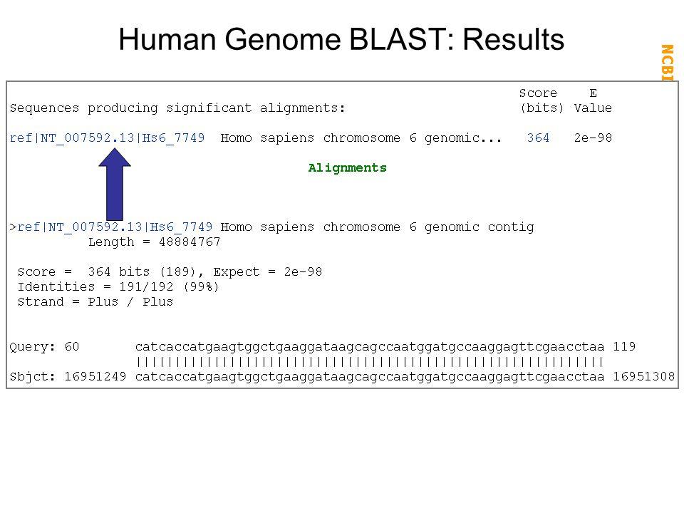 Human Genome BLAST: Results