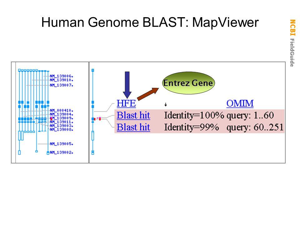 Human Genome BLAST: MapViewer