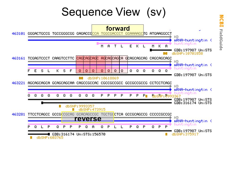 Sequence View (sv) forward reverse